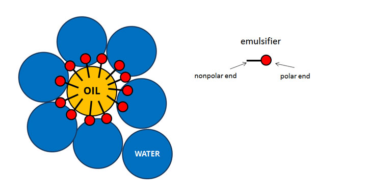 An emulsifier allows water and oil to mix to form an emulsion
