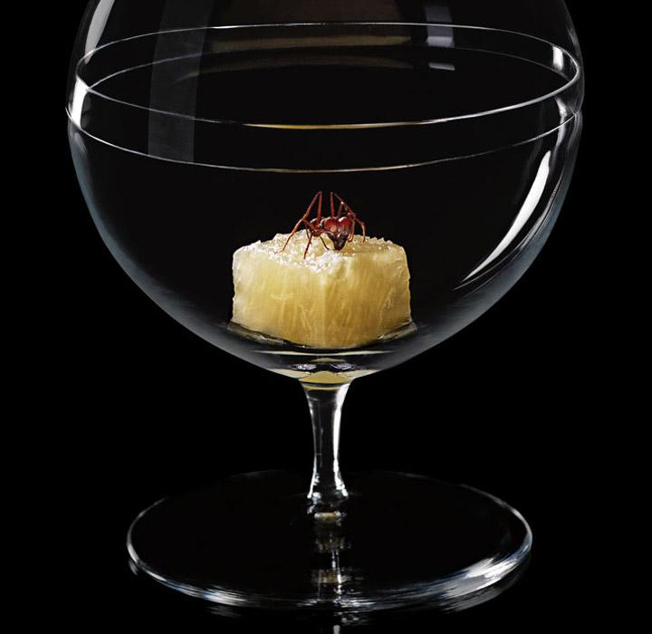 atala-ants-pineapple