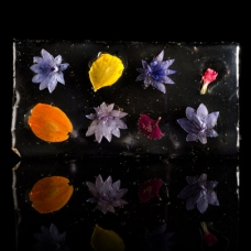 Edible Flower Glass sqr