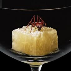 atala-ants-pineapple-sqr