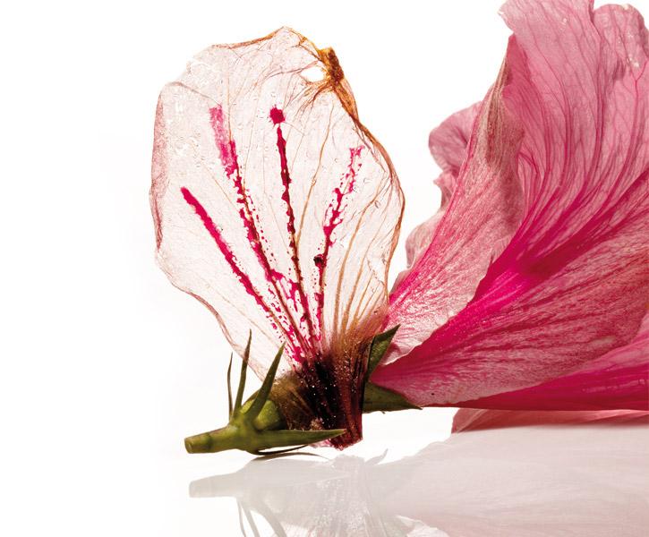 hibiscus-flower-elbulli-725