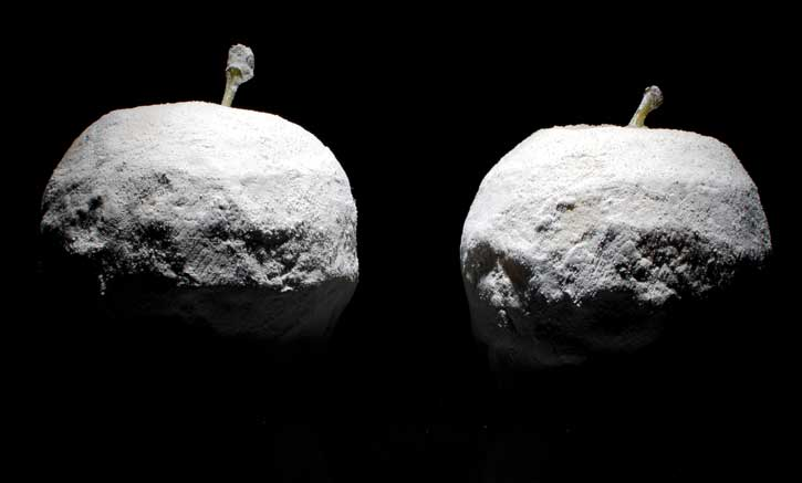 Agalita / Kaolin Recipe Fragant Apples at Mugaritz -whole