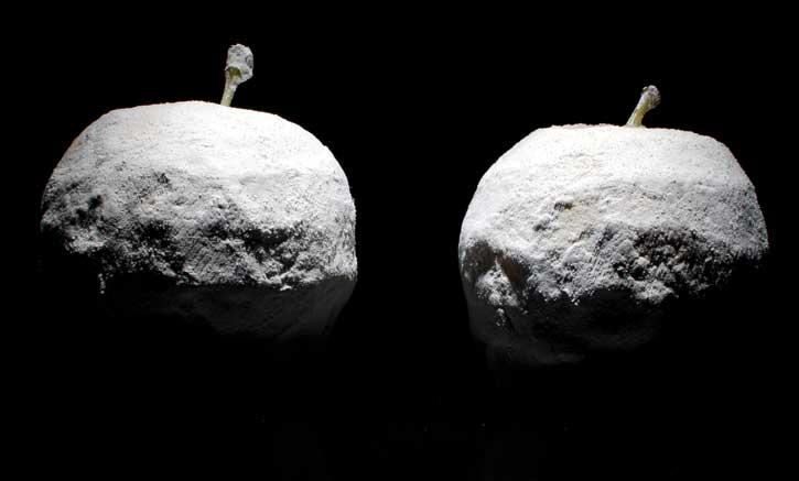 Agalita / Kaolin Recipe Fragant Apples at Mugaritz -whole