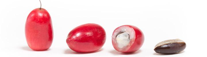 miracle-berries-real-720