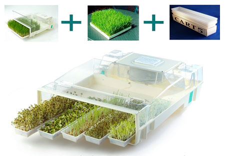Growing Micro Greens and Sprouts the Easy Way | Molecular