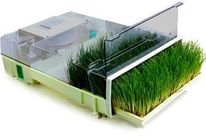 Easygreen Sprouter Wheatgrass