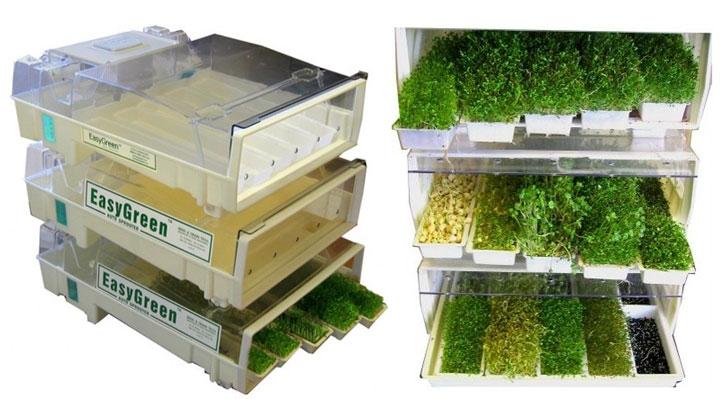How to Expand Microgreens All Winter Season Long