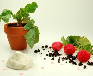 Dried-olive Soil, Goat Cheese Foam, Pickled Radishes